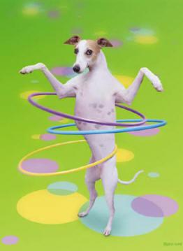 Hula-hoop-dog